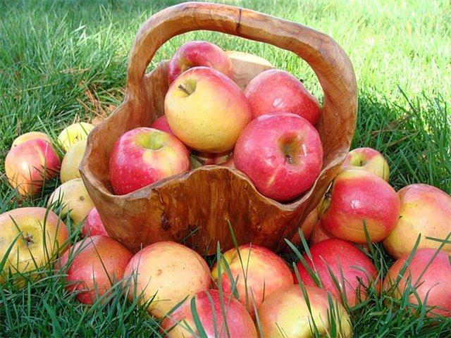 гадание по яблокам