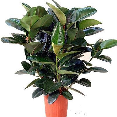 Как расположить домашние растения согласно фэн-шуй