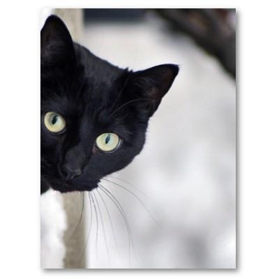 Кошка – ваш магический друг