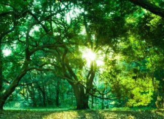 Свойства очистки деревьев